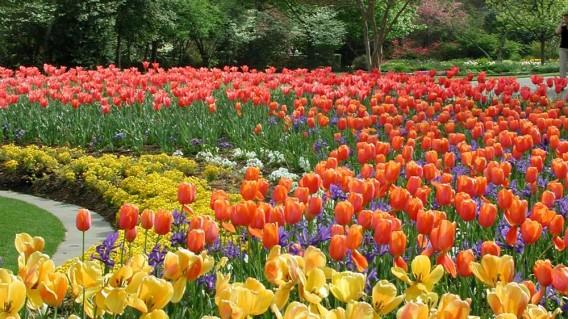 arboretum Blooms511