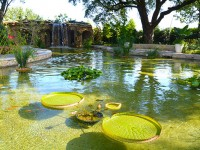 Celebrate Father's Day at the Dallas Arboretum