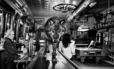 Samuel Lynne Galleries - David Yarrow