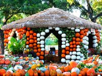 Great Discounts for Autumn at the Dallas Arboretum