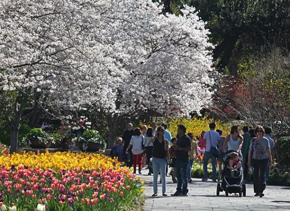 Dallas Arboretum Spring Break