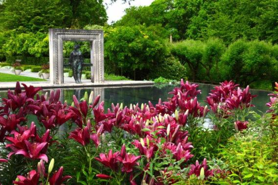 Dallas Arboretum flowers
